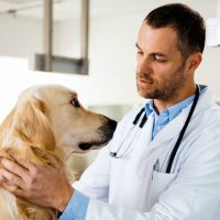 Veterinarian Jobs