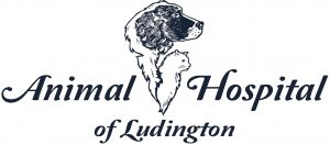 Animal Hospital of Ludington